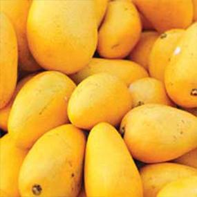 02-Mango