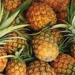 03-Pineapple