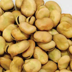06-Whole-Egyptian-Narrow-Beans