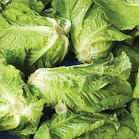10-Salad
