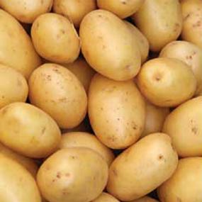 12-Potato